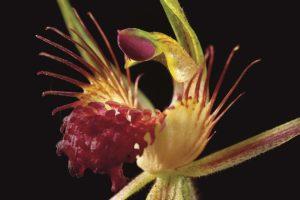 Consejos para capturar flores por la noche
